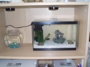Stevie's Shelf Fish