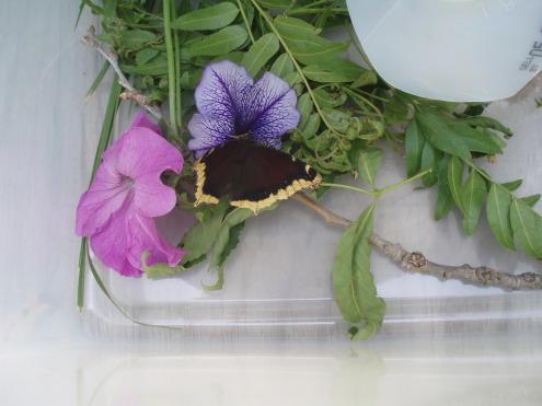 We noticed purple flowers were the favorite.