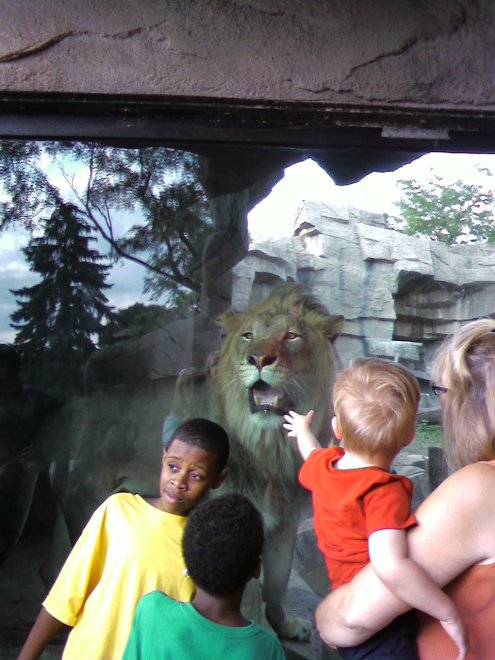 "Snack time! You know that lion is NOT posing for a picture. He's thinking, ""I could get a head AND an arm."""
